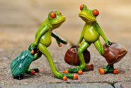 frogs-travelling