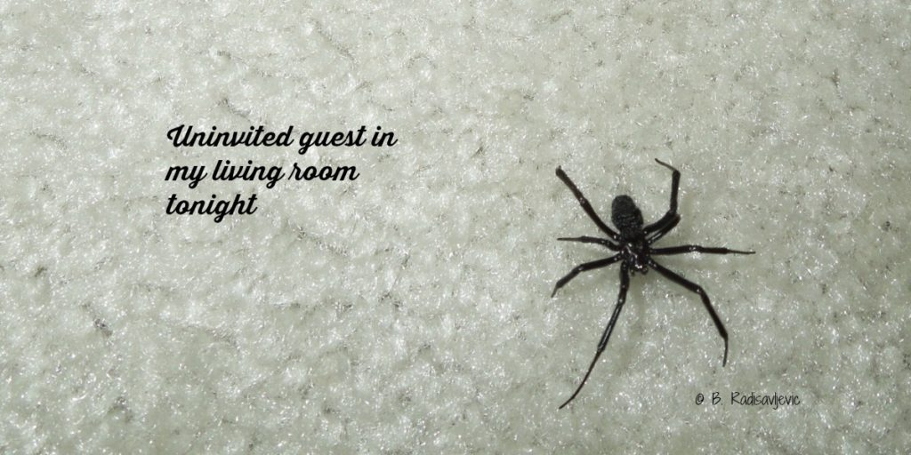 4lb-crawling-black-widow-text-0629