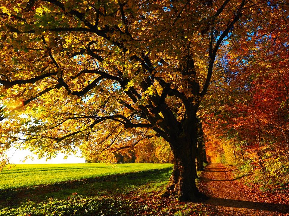 tree-Sadaqa e Jariya: The Rewards For Ongoing Charity in Islam