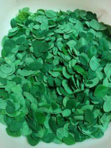 moringa leaves 4