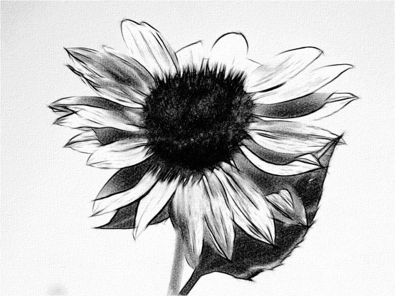 Art By Nemzie