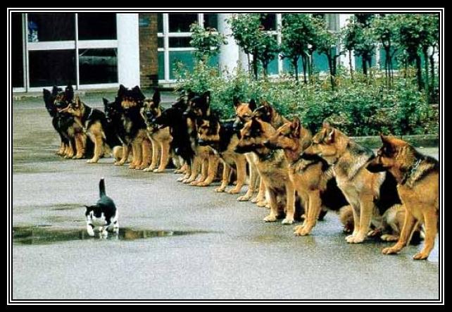discipline pix