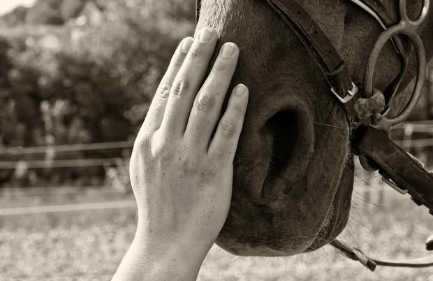 HORSE HEALING POWER