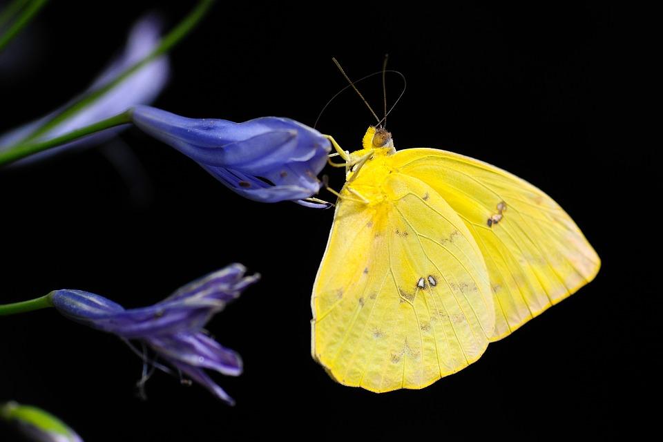 butterfly-1413678_960_720