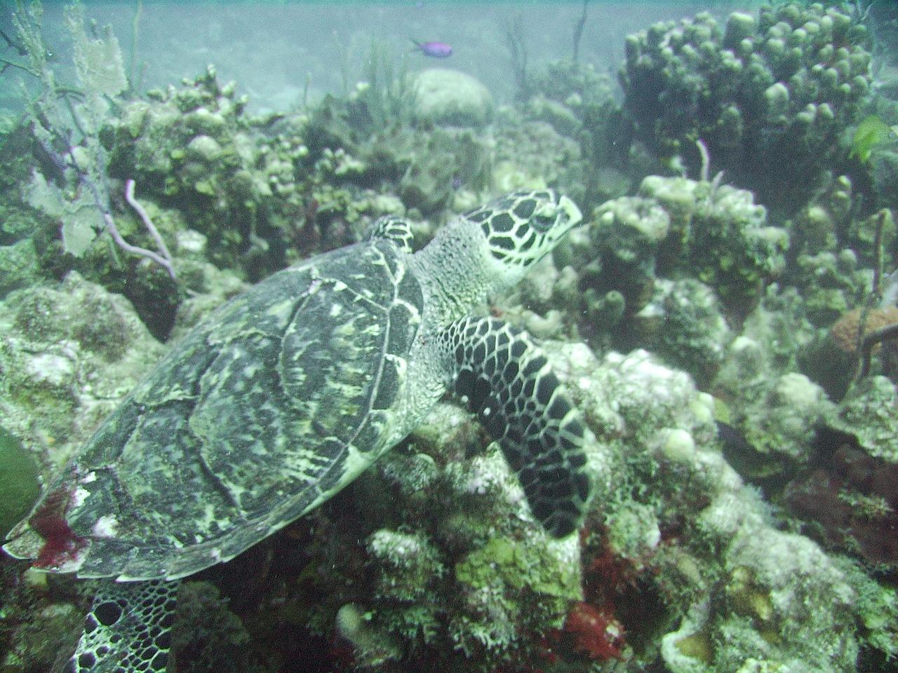 turtle-699605_1280