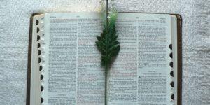 Bible Photo