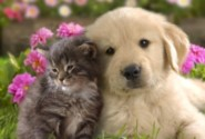 Group logo of Cats & Dogs Lovers
