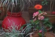 Group logo of Gardening